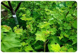 Aktuális kertészeti téma – Gyümölcsösök és kerti vetemények védelme.